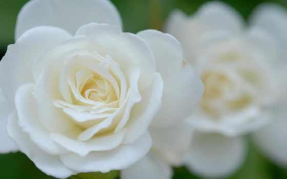 hoa, hương, hinh, trứng, hành, nhất, tinh,