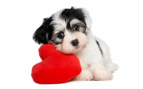 собаки, животные, щенок Фон № 48869 разрешение 1920x1200