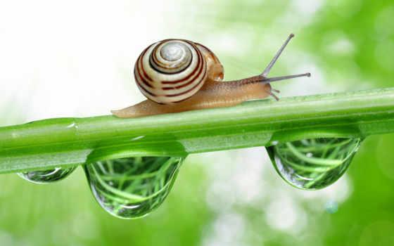 snail, resolution, high