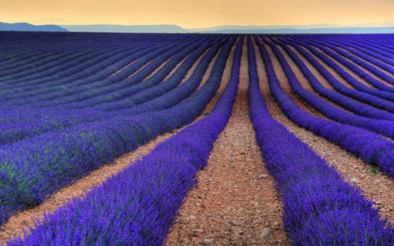 lavender, прованс, aix, поля, франция, flickr, поле, pinterest,