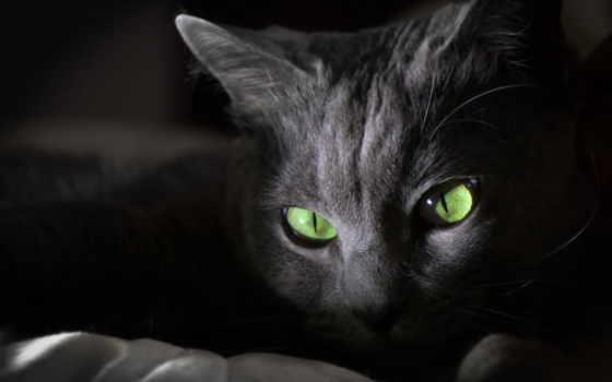 кошки, кот, чёрно