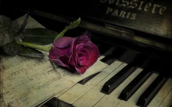 piano, cvety, ключ, музыка, роза, нота, инструмент, stokovyi