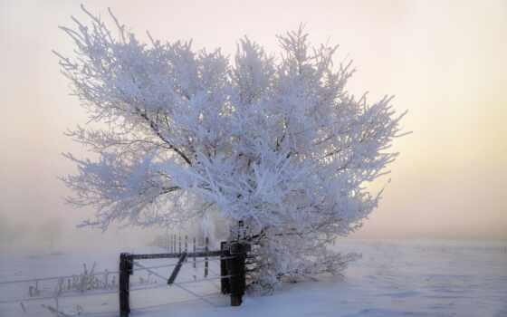 дерево, winter, tapety, blizzard, иней, alive, komentarze, jako-cus