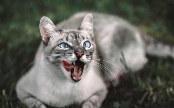 кот, animal, еда, pet, life, млекопитающее
