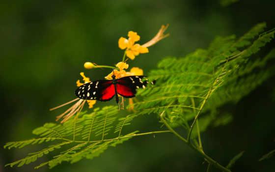 desire, мобильные, мобильного, телефона, телефон, бесплатные, butterfly,