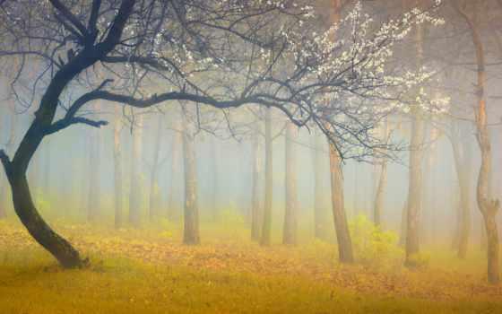 дерево, мне, попросил, боге, расскажи, alder, inspiration, фотообои, тагор,