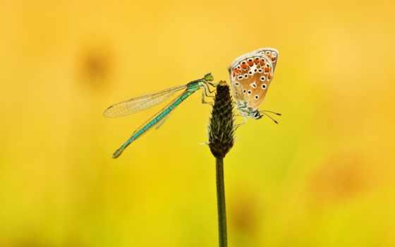 стрекоза, бабочка, butterflies, растение, dragonflies, pin,