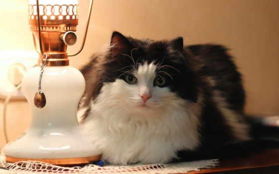 осень, кот, торшер, лампа, пушистый, ложь, possible, бультерьер, аву, bull, страница,