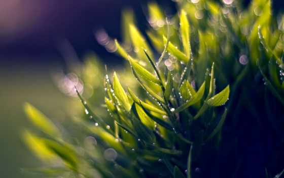 растения, листва, природа