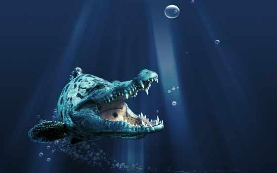крокодил, zhivotnye, крокодилы, пасть, морские, water, море,