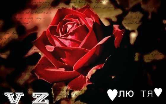 роза, kartinik, cvety, white, free, цветы, red, обстановка