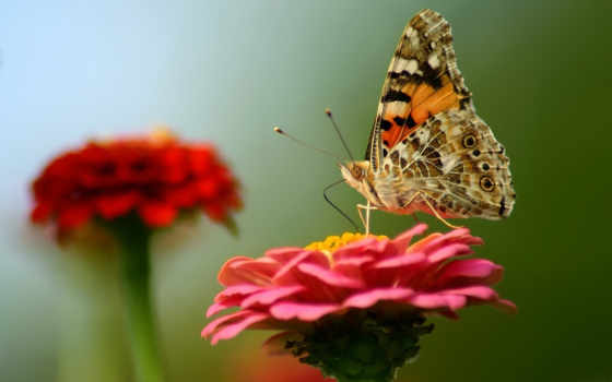 бабочка, những
