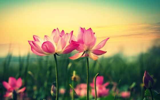 цветы, цвета, картинка