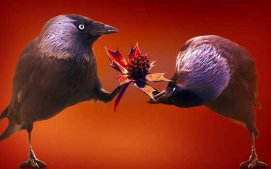 para, любов, подарок, птиц, funny, букетика, mine, птицы, преподнесенного, animal, desktop,