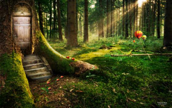 лес, enchanted