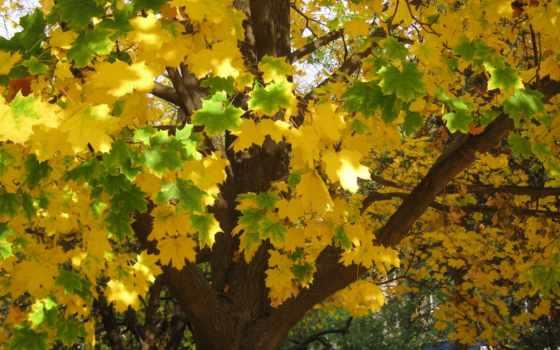 осень, trees, листва