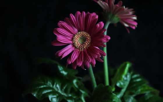 flowers, цветы, природа, high, definition, wide, красавица, red, garden,
