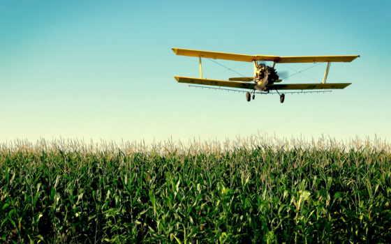 кукурузник, самолёт, авиация, corn, airplane, полет, sun, поле, зелёный,