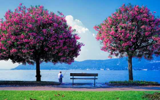 природа, весна, рыбалка, весенняя, разные, tarot, trees, příroda, tapety,