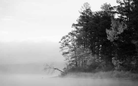 осень, лес, туман
