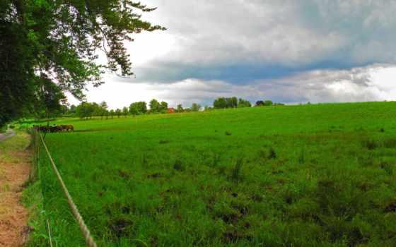 природа, зелёный, landscape
