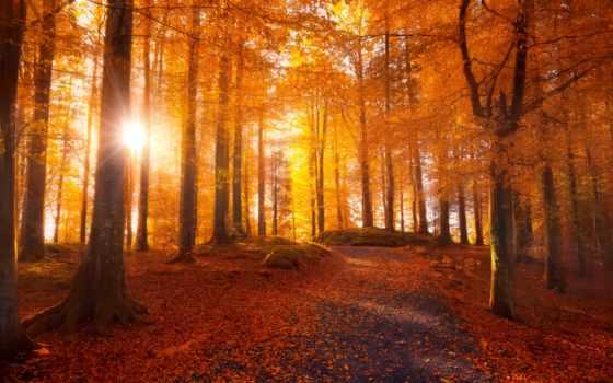 trees, лес, осень, листья, sunlight, сквозь, sun, природа, rays, дорога,