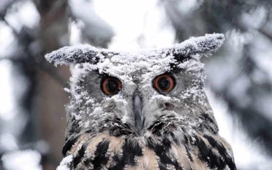 zhivotnye, снег, снегу
