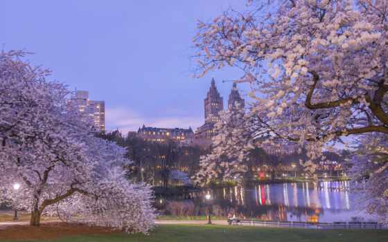 park, весна, cherry, дерево, new, york, книга, комната, one, пруд, favorite