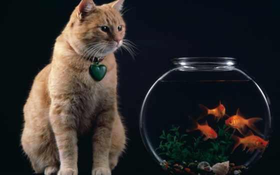 cat, fish, аквариум, animals, рыбки, bowl, рыбок, аквариумом, iphone, galerie, widescreen,