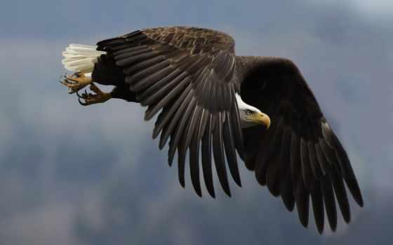 орел, птица, птицы