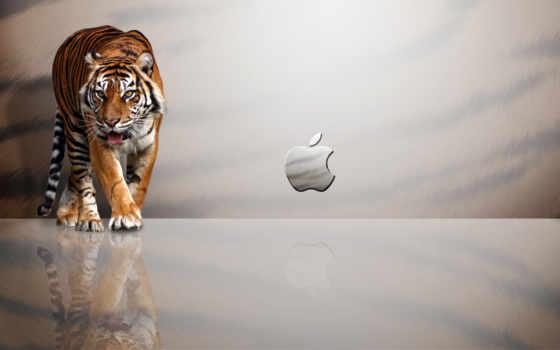 lion, тигр, apple