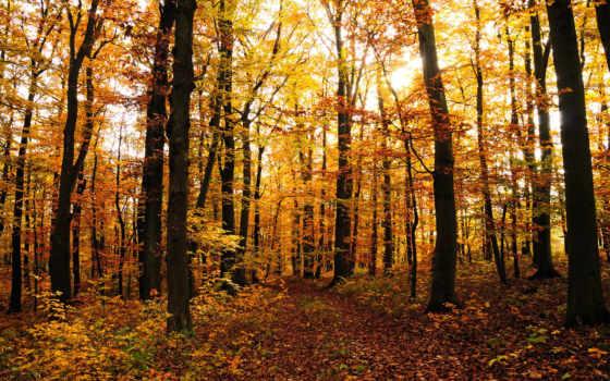осень, листва, природа, красивые, осенние, trees, лес, листопад, дерево, леса,