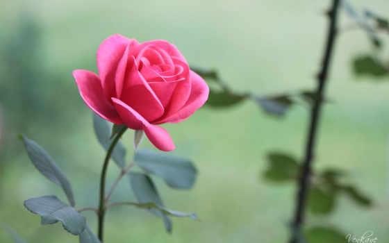 hoa, hương, hành, nın, cho, nhất, vật, bạn,