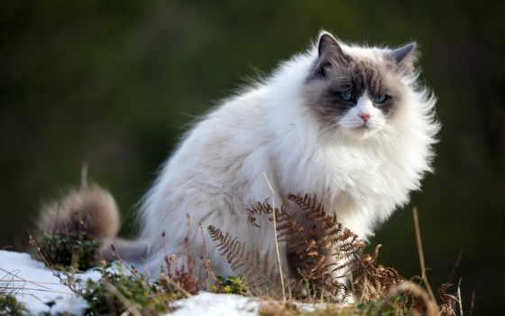 кот, весна, пушистые,