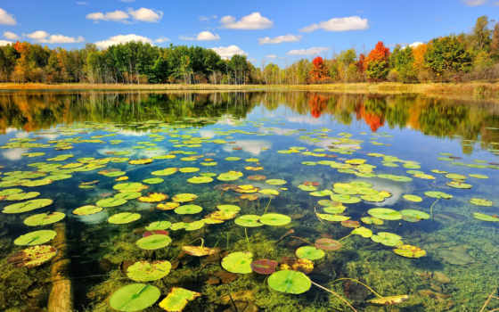 природа, озеро, красивый, лес, коллекция, море