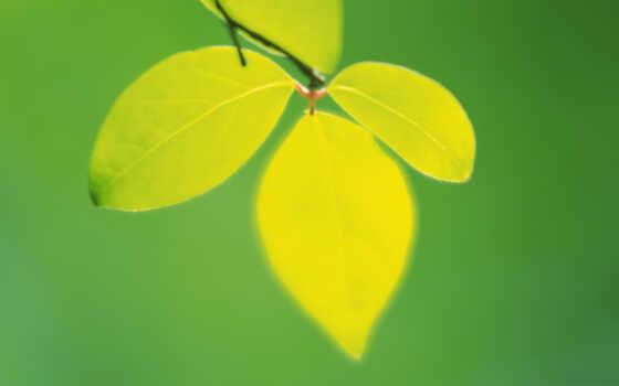 листва, зелёный