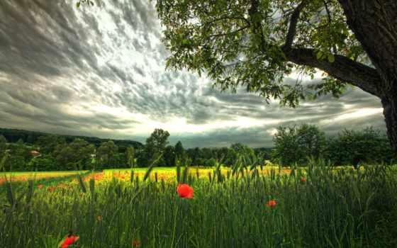 поле, природа Фон № 7952 разрешение 2560x1600