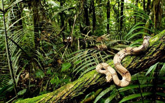 snake, джунглях, питон,