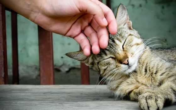штрих, кошку, кота