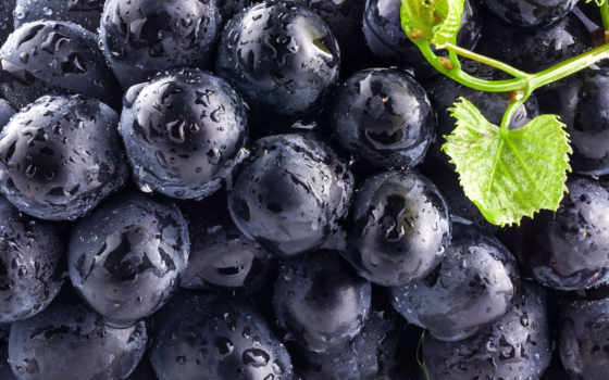 виноград, плоды, только, ягода, black, daily, blue,