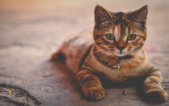 gatos, кошек, gato, adoptar, zhivotnye, medellín, que, antes,