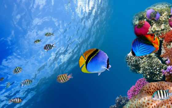 ecran, poissons, underwater