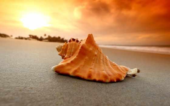 print, красивые, пляж, seashell, рапан, ракушки, песок, макро, море, природа,