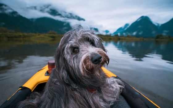 собака, лодка, animal, природа, туман, рыбалка, трава, see, озеро, kartinik