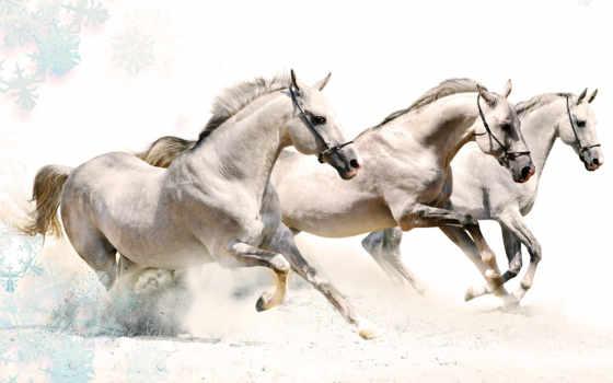 wallpaper, horse