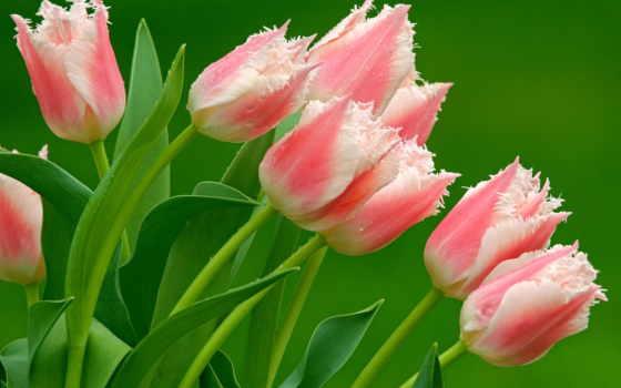 цветы, flowers