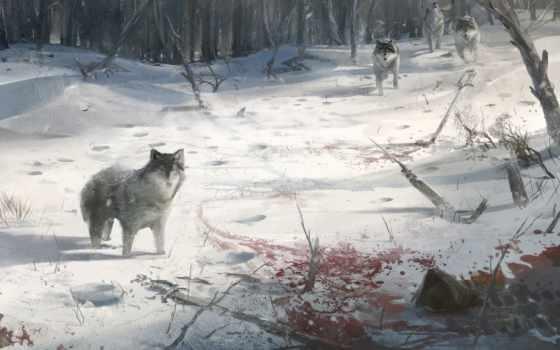красивая, картинка, волки, res, снег, кровь, волков, views, сугроб,