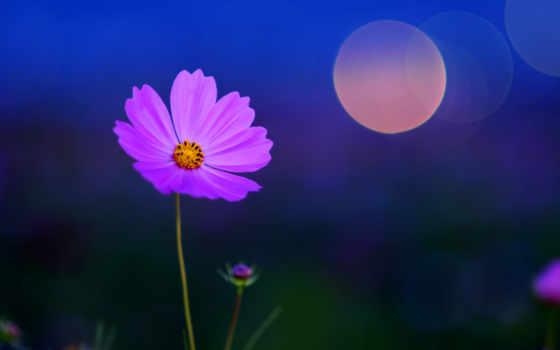 цветы, растительность, ночь