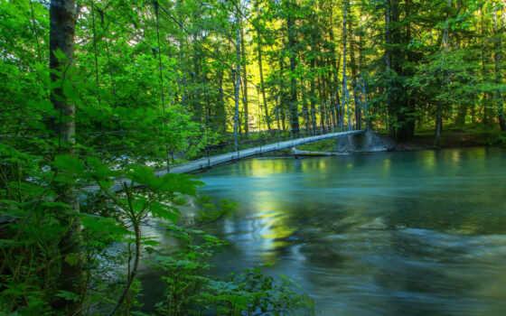 природа, summer, леса