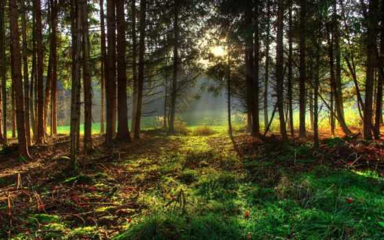 лес, красивые, качества, высокого, природы, природа, песочница, хорошего, хвойный,